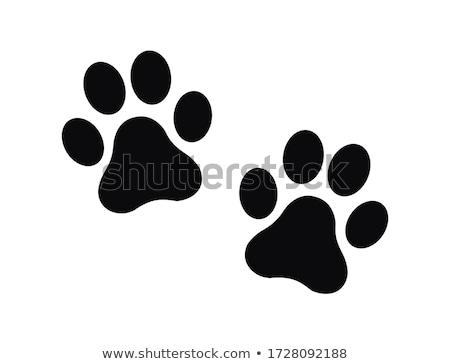 Foto stock: Cães · pegadas · praia · cão · fundo · areia