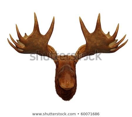 Tassidermia Moose testa wallpaper soggiorno Foto d'archivio © sielemann