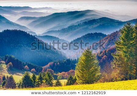 idyllic Black Forest scenery Stock photo © prill