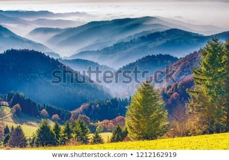 idyllic black forest scenery stock photo © prill
