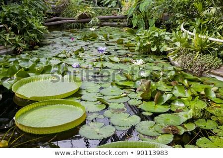 giardino · botanico · Praga · Repubblica · Ceca · foglia · verde · impianto - foto d'archivio © phbcz