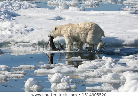 Bears and seal Stock photo © michelloiselle