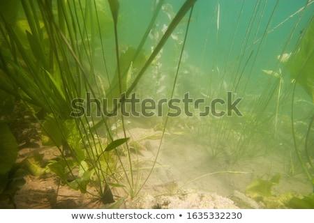 manhã · luz · solar · vegetação · fogueira · fumar - foto stock © carloscastilla