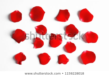 Laying in Rose Petals stock photo © cboswell