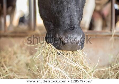 Siano obraz słomy rolnictwa Zdjęcia stock © stevanovicigor