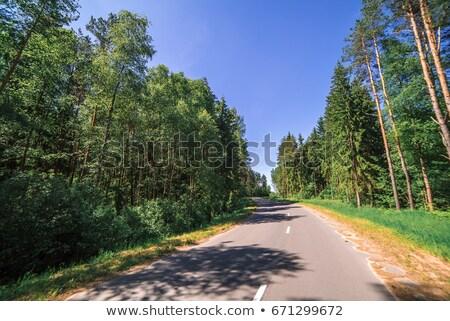 Stok fotoğraf: Highway Through Pine Tree Forest