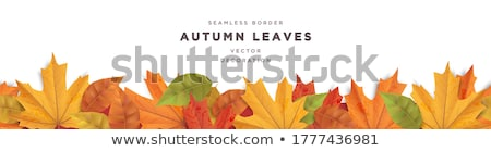 autumn border element stock photo © lightsource