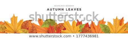 Stock photo: Autumn Border Element