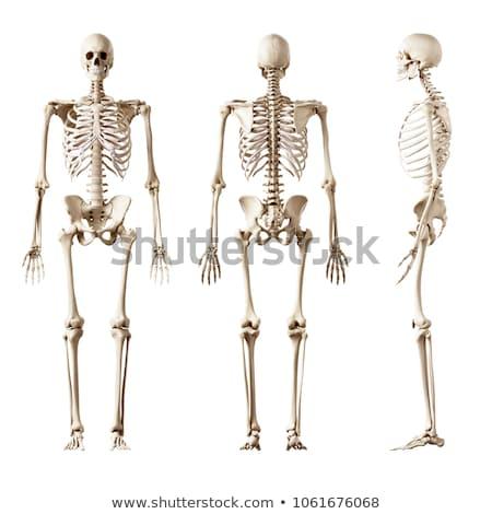 Foto stock: Humanismo · corpo · esqueleto · anatomia · pose · escuro