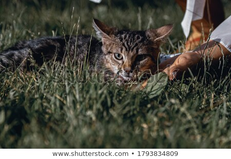 Cute little girl hugging tabby cat with love, looking at camera. Stock photo © HASLOO