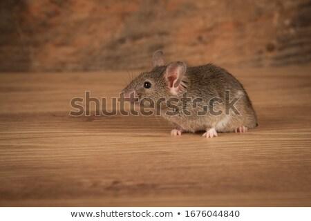 мыши · сперма · вокруг · интернет · веб · кабеля - Сток-фото © jayfish