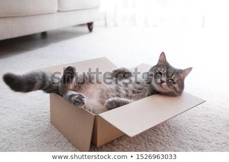 curioso · gato · isolado · branco · bebê · cabelo - foto stock © Stephanie_Zieber