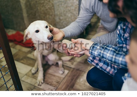 animal adoption stock photo © lightsource