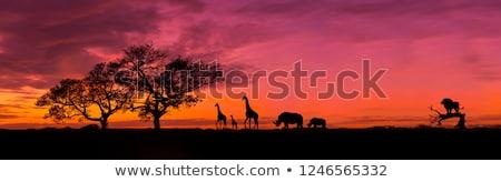 vicces · rajz · zsiráf · elefánt · fehér · baba - stock fotó © Glenofobiya
