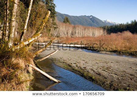 winter along mountain stream hoh river banks olympic mountains stock photo © cboswell
