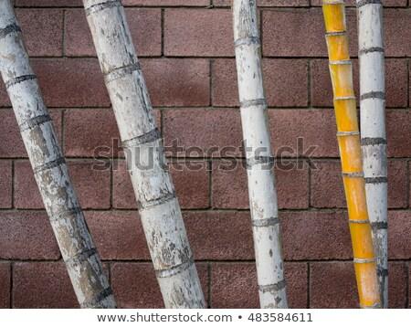 Bambu doku soyut model yeraltı etiket Stok fotoğraf © armin_burkhardt