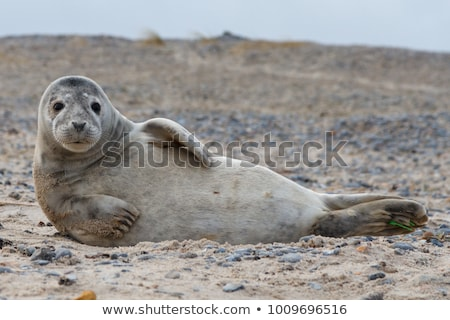 Stock photo: Sealions at the beach
