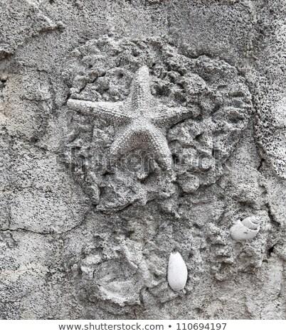 Eski denizyıldızı fosil taş doğa deniz Stok fotoğraf © jonnysek