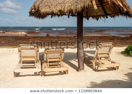 alga · costa · água · verão · oceano · África - foto stock © meinzahn
