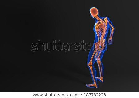 Human skeleton. Rear view. Contains clipping path Stock photo © Kirill_M