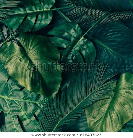 leaves on a background of sea Stock photo © Pavlyuk