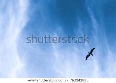 lone bird flying in the sky stock photo © morrbyte