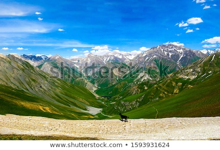 dog on mountain pathway Stock photo © Quasarphoto