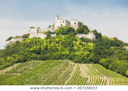 ruins of Falkenstein Castle with vineyard, Lower Austria, Austri Stock photo © phbcz