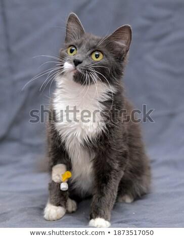 раненый · кошки · смешанный · конус - Сток-фото © wavebreak_media
