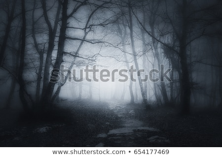 scary misty forest in black and white for halloween stock photo © jaffarali