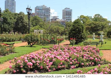 Rózsa park Buenos Aires Argentína erdő ezer Stock fotó © fotoquique