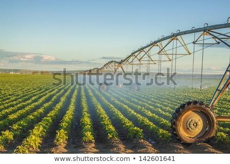 Wody nawadnianie dziedzinie Nevada USA Zdjęcia stock © meinzahn