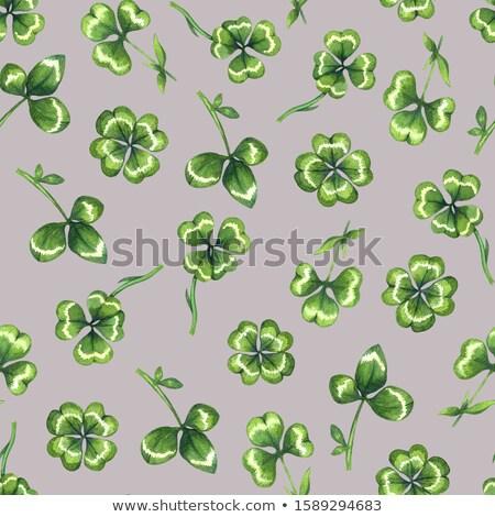 Yeşil yaprakları yonca şanslı yaprak dizayn Stok fotoğraf © orensila