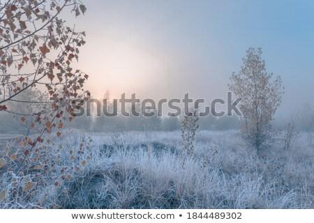 Kék dér fagy közelkép jég tél Stock fotó © aleishaknight