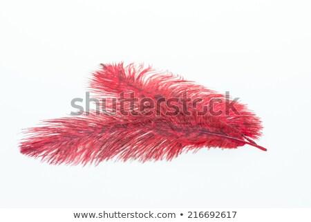 Rouge autruche plumes peint blanche graphique Photo stock © blackmoon979