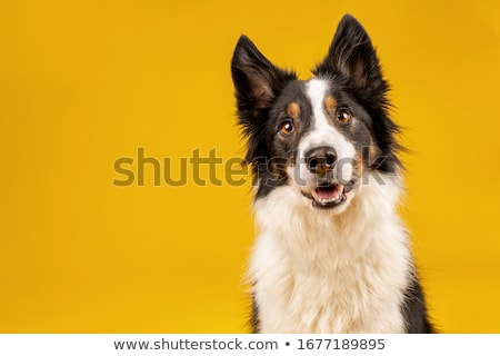 Stockfoto: Intelligent Dog Portrait
