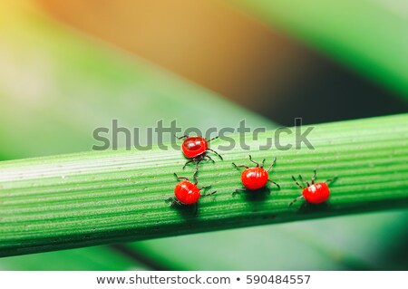Molti bug foglie verdi illustrazione natura panorama Foto d'archivio © bluering