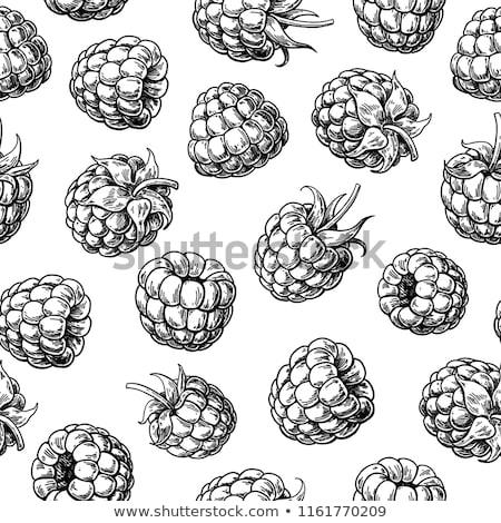 Vintage BlackBerry текстуры стиль природы Сток-фото © ConceptCafe
