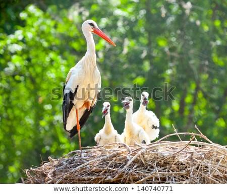 Madár pár fészek illusztráció fa természet Stock fotó © bluering