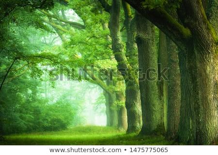 Erdő gyám fenséges szarvas kék izzó Stock fotó © psychoshadow