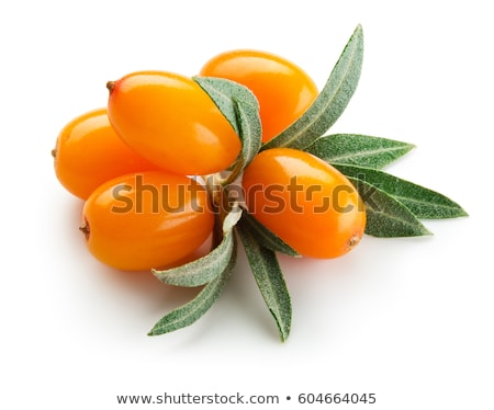 berries of sea buckthorn with leaves stock photo © cipariss