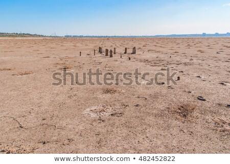 Fa tó Ukrajna bank sós globális felmelegedés Stock fotó © Zhukow