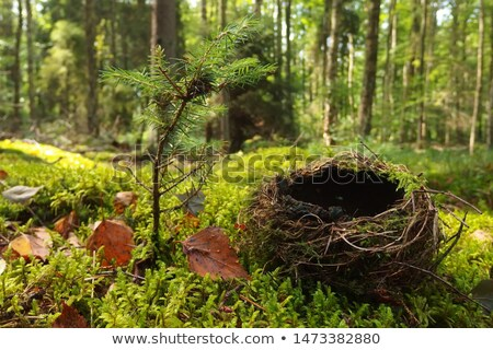 Close up empty birds nest in the tree Stock photo © AlisLuch