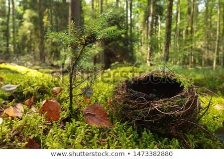 Boş kuşlar yuva ağaç ev Stok fotoğraf © AlisLuch