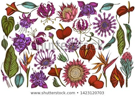 fiori · fioritura · fiore · natura · giardino · foglie · verdi - foto d'archivio © scenery1