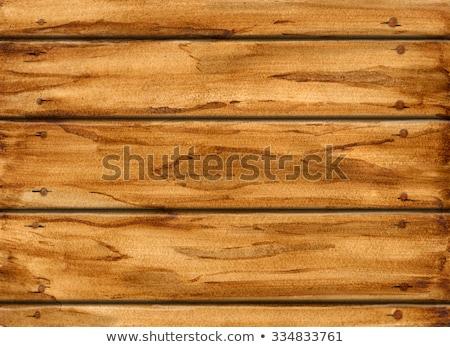 ニレ 木材 表面 本当の テクスチャ ストックフォト © taviphoto