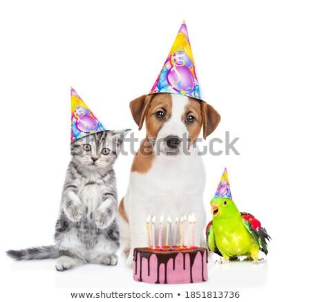 Foto d'archivio: Gruppo · molti · divertente · animali · indossare · compleanno