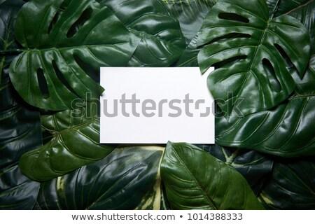 Foto stock: Primavera · folha · verde · escuro · cópia · espaço · naturalismo · forma