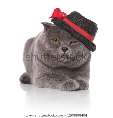 Cavalheiro seis branco cara gato Foto stock © feedough