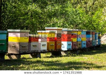Arı orman tropikal gıda ağaçlar alan Stok fotoğraf © szefei